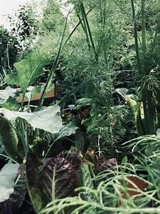 Pflanzen Im Urlaub Bewässern : stress mit gie en war gestern hochbeete mit ollas bew ssern gartenblog hauptstadtgarten ~ Markanthonyermac.com Haus und Dekorationen