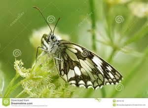 Butterflies Natural Habitat