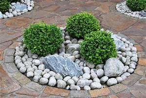 Immergrüne Pflanzen Winterhart Kübel : immergr ne koniferen ~ Lizthompson.info Haus und Dekorationen