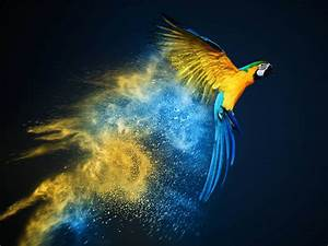 Flying Parrot HD Wallpapers