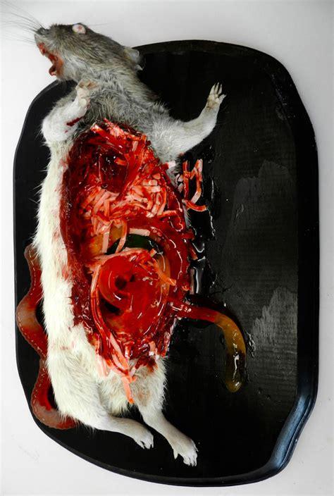 Gallery Dead Animal Art