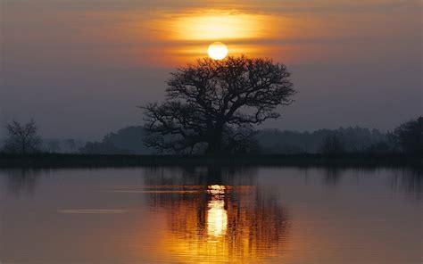 lake sunset tree reflection wallpaper hd