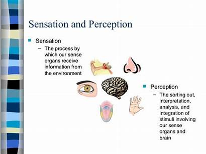 Sensation Perception Examples Between Relationship Difference Further