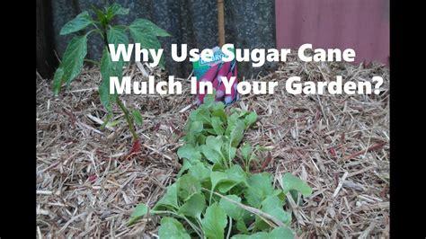sugar cane mulch   garden youtube