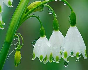 1000+ images about After The Rain on Pinterest | Scenery ...