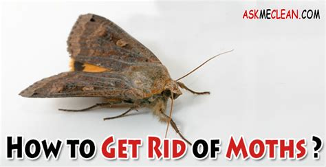 How To Get Rid Of Moths In Closet Naturally by How To Get Rid Of Moths