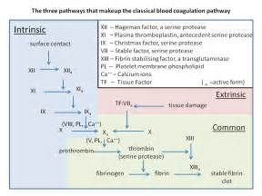 ... factor x fx in the coagulation cascade without antithrombin as Coagulation Factors