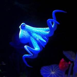 Online Buy Wholesale fluorescent fish tank from China