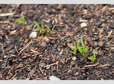 Raised Garden Beds Cabbage, Radishes, Onions, Broccoli