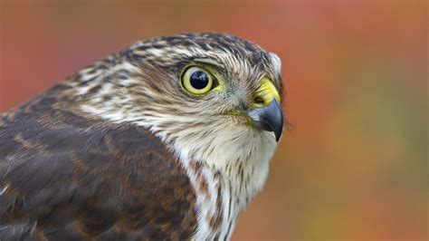 you could see thousands of hawks in one day cool green