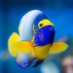 Aquarium Fische Süßwasser Liste : tierbestand tierpark nymphaea esslingen am neckar ~ Watch28wear.com Haus und Dekorationen
