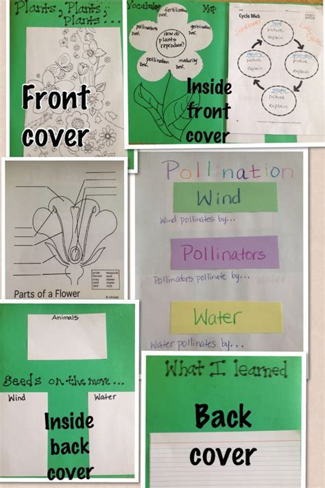 11 Best Images About 4th Grade Science On Pinterest  Literature, Activities And Food Chains