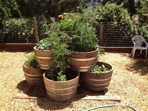wine barrel planter ideas 9 best images about landscaping ideas on trees