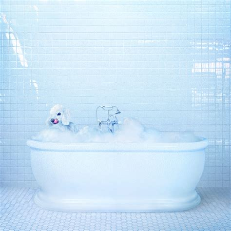 Image result for frankie cosmos album vessel