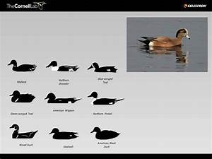 Duck And Waterfowl Identification Try A Free Quiz Bird