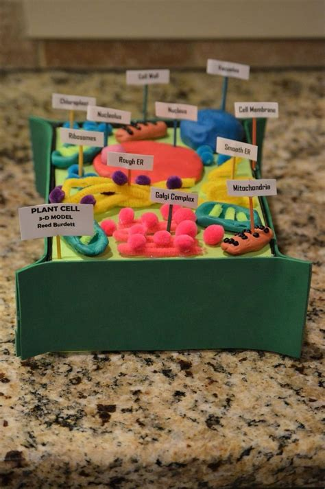 3d Plant Cell Project 7th Grade