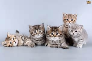 what of cat are you five often overlooked financial costs of cat ownership