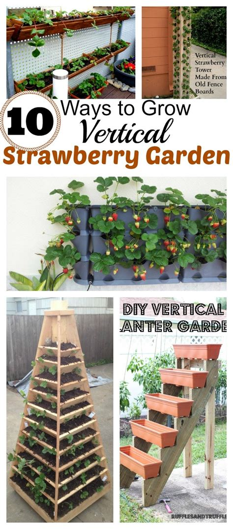 grow vertical strawberry garden   diy ways