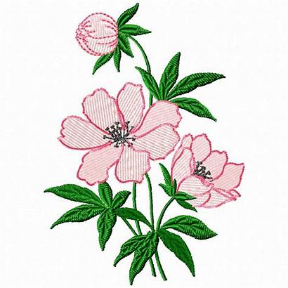 Embroidery Flower Designs Hand Simple Border Flowers