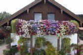 balkonbepflanzung With katzennetz balkon mit pflanzen gegen zombies 2 garden warfare