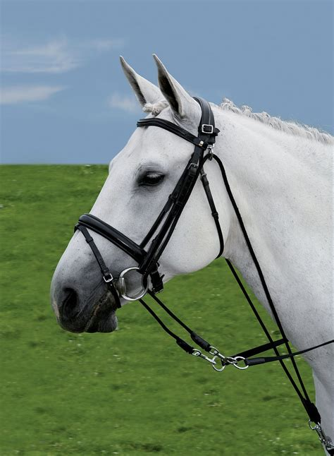 types  side reins horse pilates