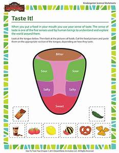 Taste It! Worksheet – Human Body Science for ...
