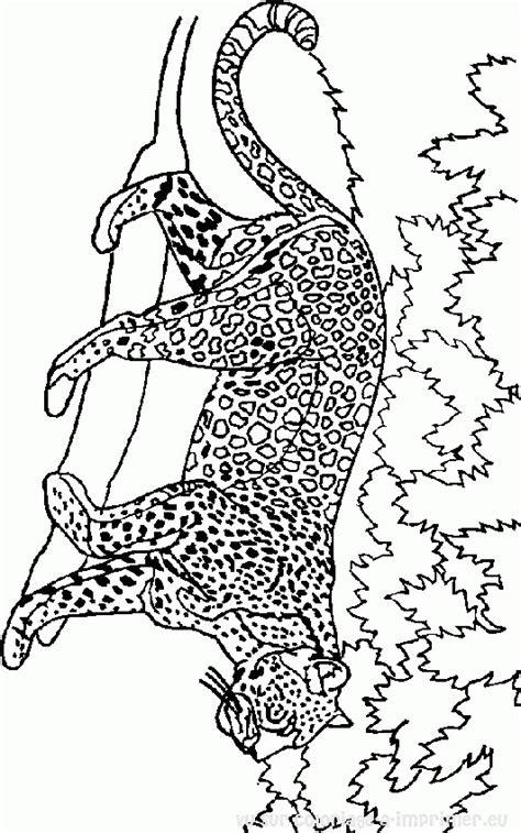 Kleurplaat Roofdieren by Coloriage 224 Imprimer Coloriage Tigre 008