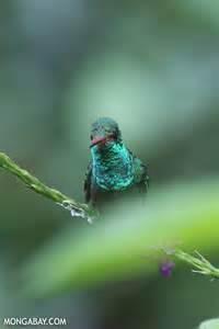 Amazon Rainforest Birds