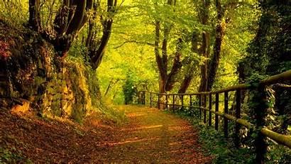 Windows Wallpapers Forest Desktop Path Woodlands Fall