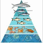 bycatch-of-sharks