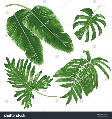 Set Tropical Leaves Isolated On White Stock Vector