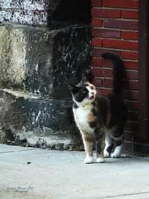 alley cat alley cat by darlene bell