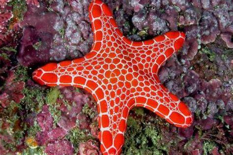 starfish wild life planet