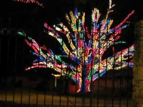 tree wrapped in christmas lights youtube
