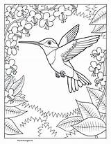 Hummingbird Coloring Pages Popular sketch template