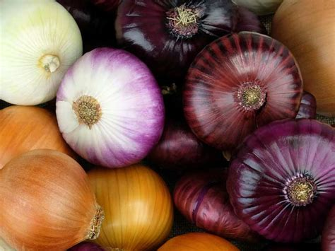 onions  nutrition facts  health effects