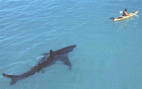 greatest shark photo  nah