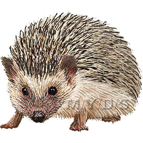 Hedgehog Clipart Hedgehog Clipart Clipart Suggest