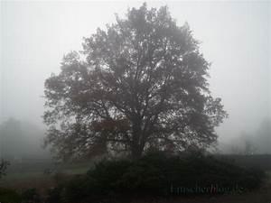 Fällen Von Bäumen : kreis weist auf baumschutz hin baum und busch sind oft gesch tzt emscherblog nachrichten ~ Eleganceandgraceweddings.com Haus und Dekorationen