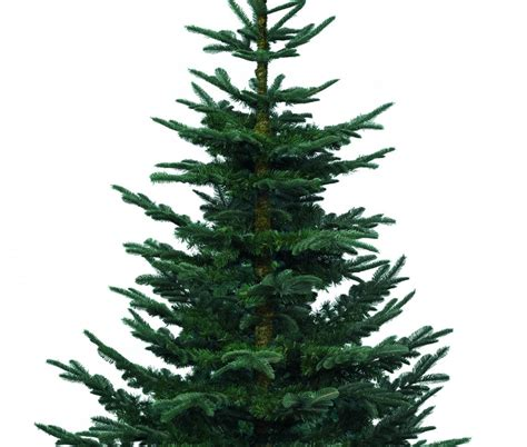 artificial noble fir christmas trees wlrtradio com