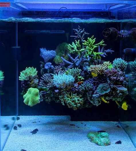 17+ Best Ideas About Reef Aquascaping On Pinterest Reef