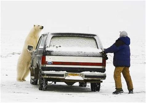 Chased By a Polar Bear – 1Funny.com