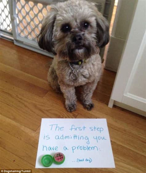 veterinary scientist casts doubt  dog shaming internet