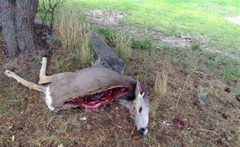 Wardens seek answers in Spring Creek deer poaching | News ...