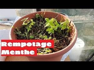 Pied De Menthe : cultiver menthe en pot rempotage menthe les bons gestes youtube ~ Melissatoandfro.com Idées de Décoration