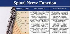 Nerves Cervical Spine Chart Neck Alternative To Osteopath Larne Chiropractor