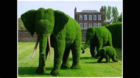topiary  art  shaping trees shrubs  art forms