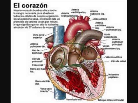 13 best images about maquetas de los sistemas digestivos respiratorio circulatorio y escretor