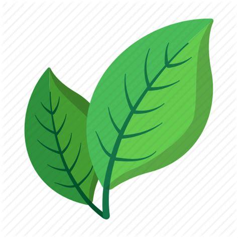 Cartoon leaf natural nobody ripe tree two icon