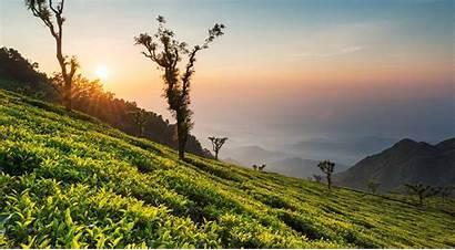 Tea Estates Estate Dale Munnar Nature